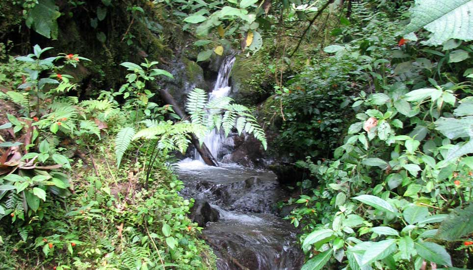 cloudforest stream
