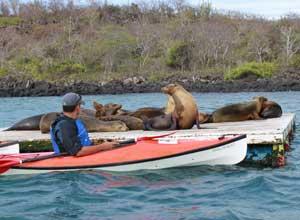 Kayak and sea lions
