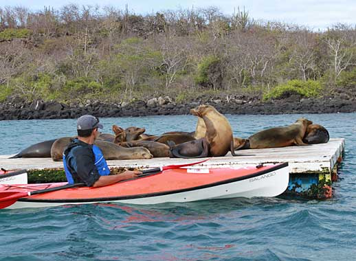 Kayak and sea lions