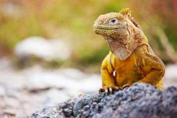 Family Galapagos Holidays